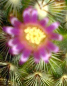 Tödlicher Kaktus