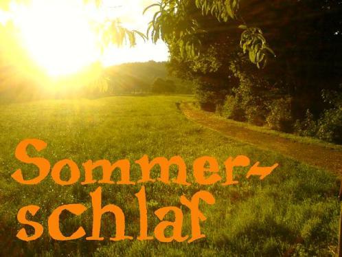 Sommerschlaf: